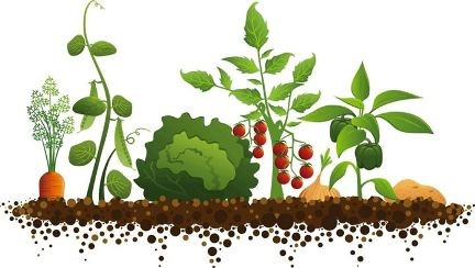 carrots, peas, lettuce, berries, onions, peppers, potatoes in dirt